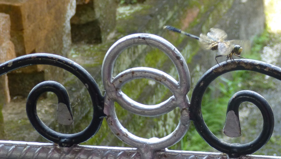 Bali Shrine Gate with Dragonfly