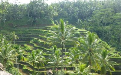 Terraced Rice Fields near Ubud, Bali