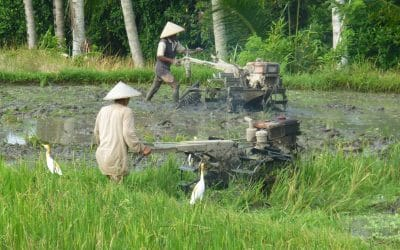 Tilling the Rice Fields in Bali