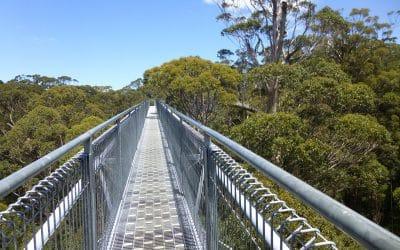 Valley of the Giants Tree Top Walk, Denmark, Western Australia