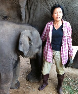 Lek, founder of Elephant Nature Park, Chiang Mai, Thailalnd