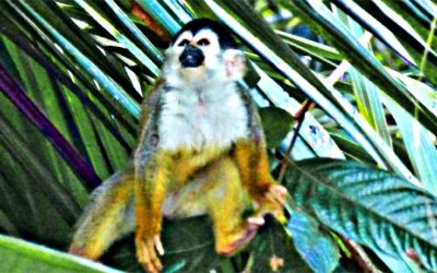 Exotic Costa Rica Wildlife on Sierpe River Boat Tour