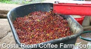 Unique Costa Rican Tour at El Toleado Coffee Farm