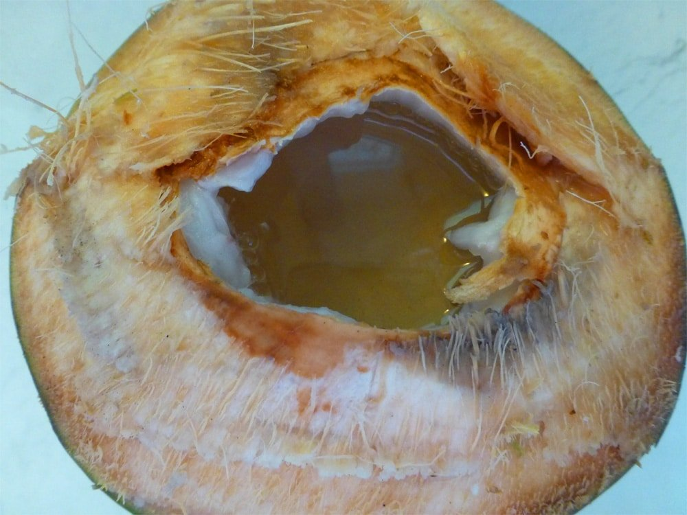 agua de pipa in a young coconut