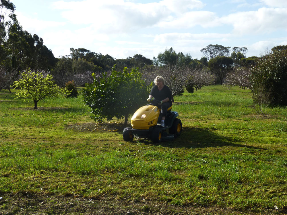 Laurie mowing orchard in Kendenup, WA