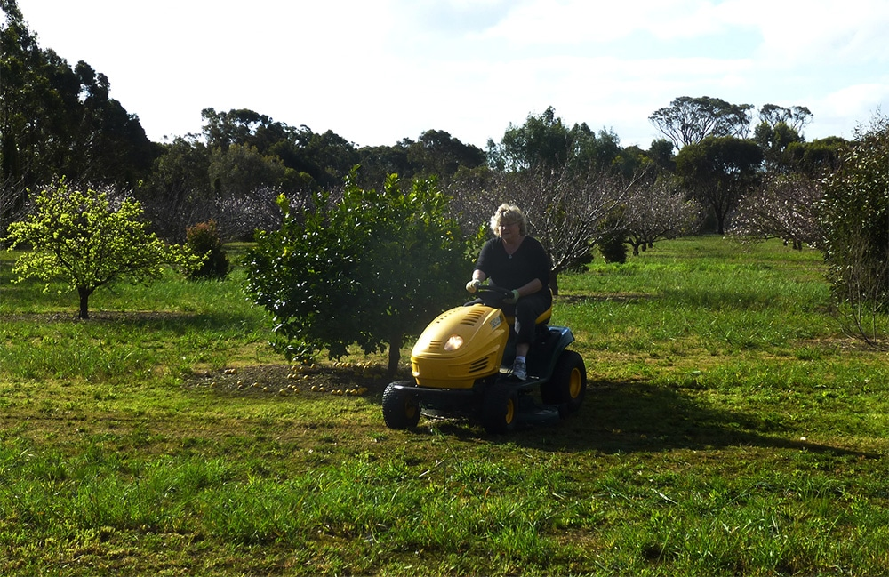 Laurie Mowing the Orchard in Kendenup, Western Australia