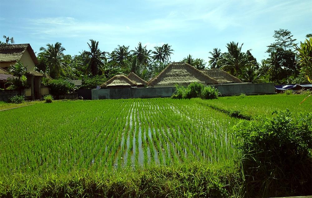 Visions of Tropical Bali