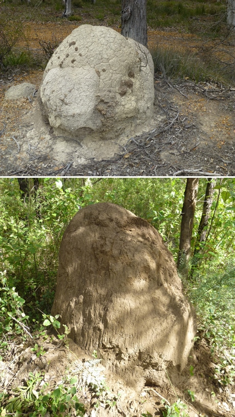 Australian termite mounds