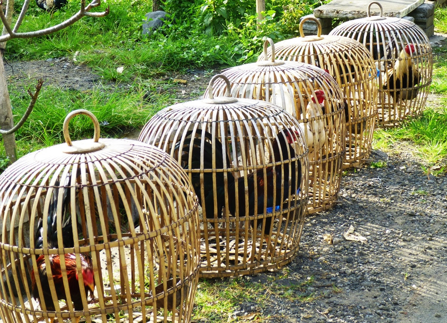 Chickens in cages in our villages