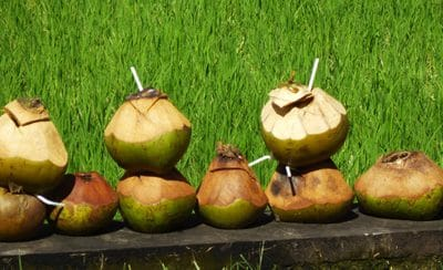 Roadside Coconuts for Recycling in Ubud, Bali