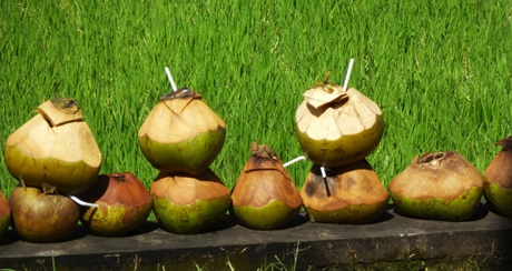Coconuts along the road side, Ubud, Bali