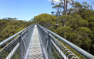 Valley of the Giants Tree Top Walk, Denmark, Western Australia