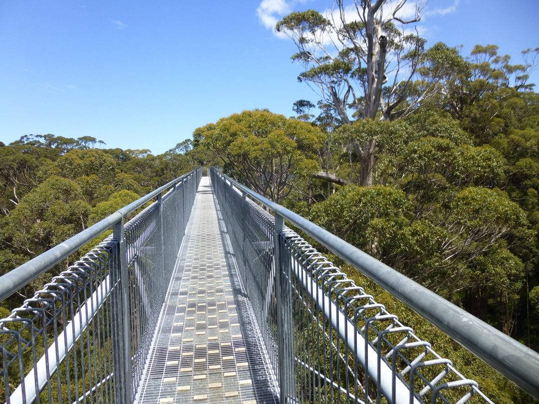 Treetop walk at the Valley of the Giants, Denmark, WA