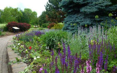 Serene Beauty of Humber Arboretum