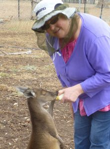 Laurie bottle feeding a young kangaroo named James