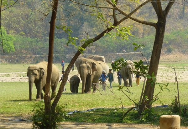 Elephants at Elephant Nature Park, Chiang Mai, Thailalnd