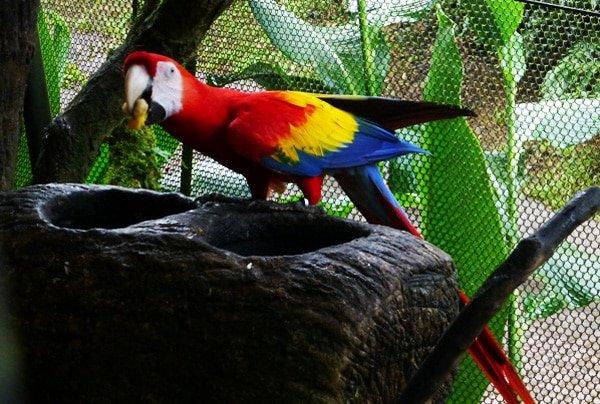 Macaw in La Paz Waterfall Gardens, Costa Rica