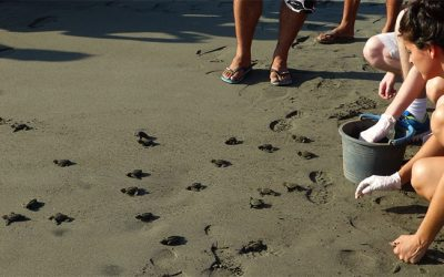 Protecting Costa Rica's Sea Turtles at Playa Tortuga