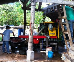 Toledo Coffee Farm Coffee Bean Extractor