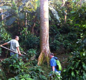 Toleado Coffee Farm, Atenas, Costa Rica