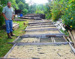 Costa Rica Toleado Coffee Farm Coffee Beans Drying