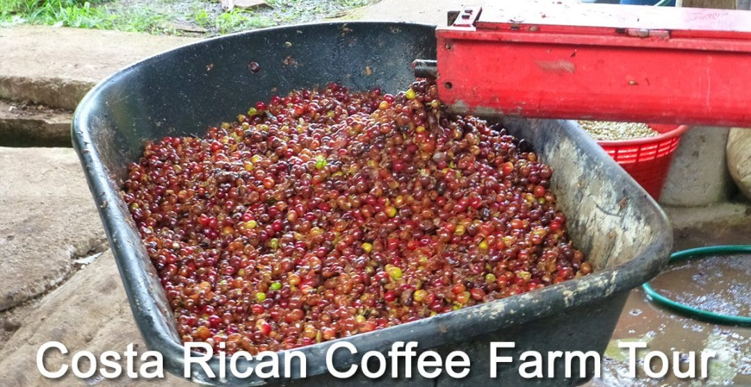 Unique Costa Rican Tour at El Toledo Coffee Farm